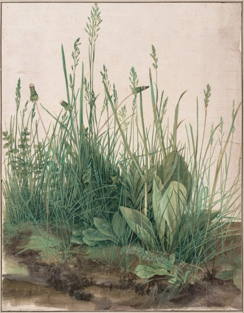 Albrecht Dürer, The Great Peace of Turf. 1503